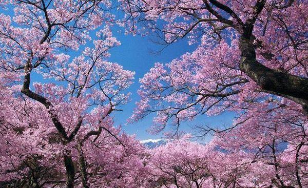 醉美黄山之赏桃花