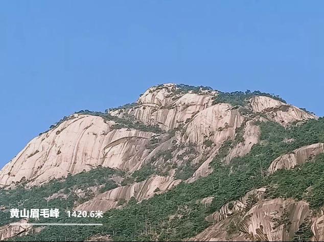 黄山眉毛峰